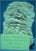 stromatolite modern